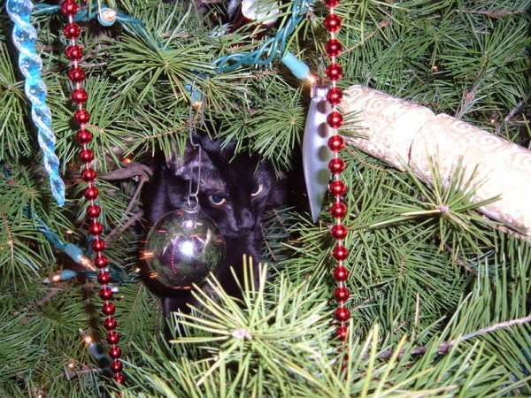 Grumpy black cat in Christmas tree, framed by red bead garland.